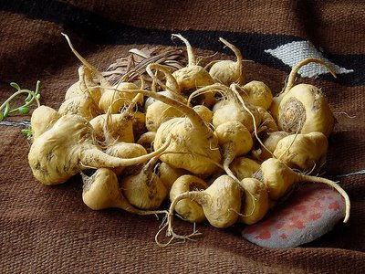 What are the benefits of Peruvian maca?